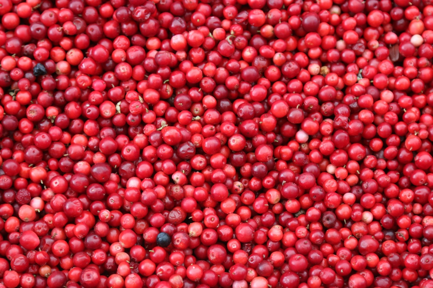Cranberries may be an effective food against contracting UTI.